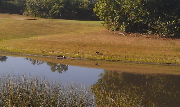 A gator and bird hanging out along the lake between number 5 & 7