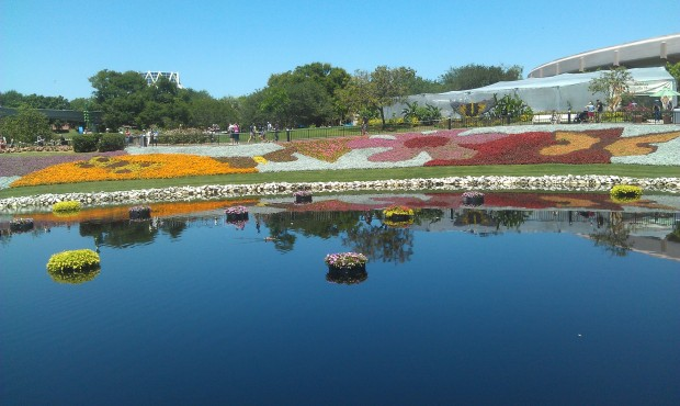A wide shot of some of the flower beds at EPCOT