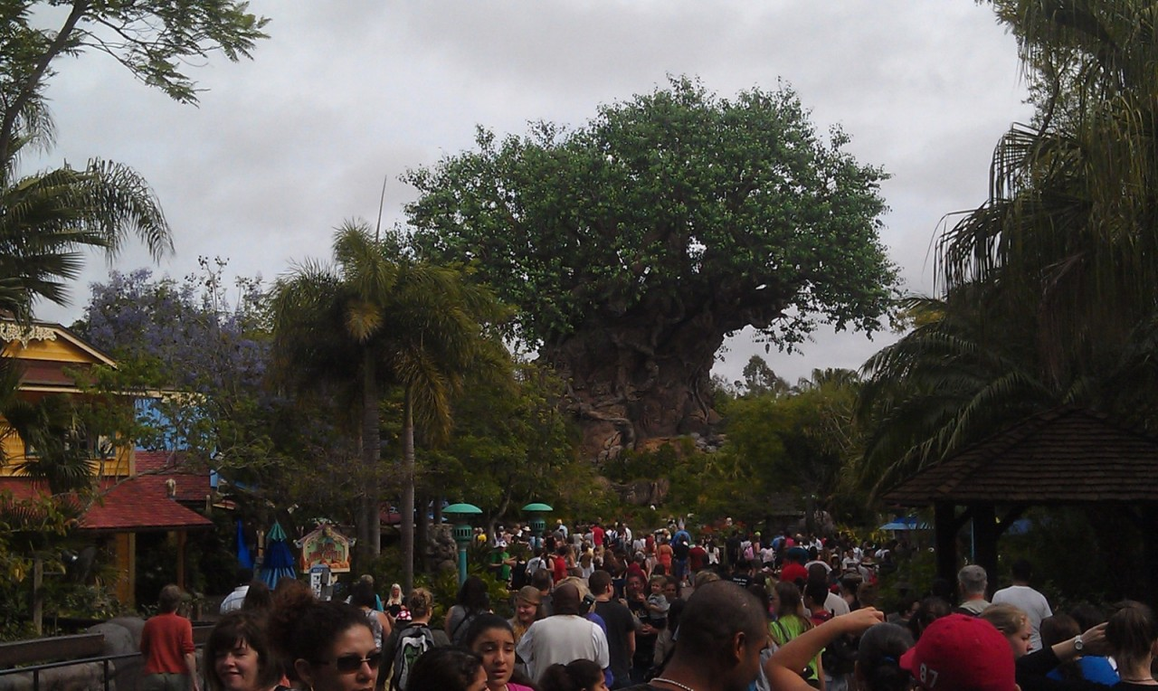 First park of the day, Animal Kingdom.  The Tree of Life.  Tomorrow the park turns 14.
