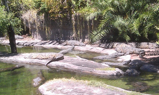 Had a request for a croc picture the other day.