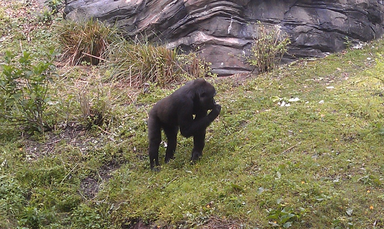 Hanging out in Pangani Forest watching the gorillas