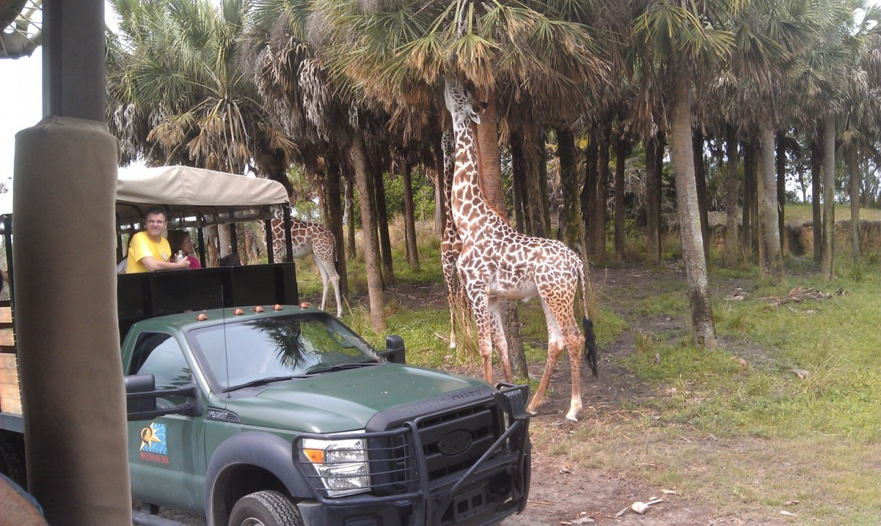 On safari…