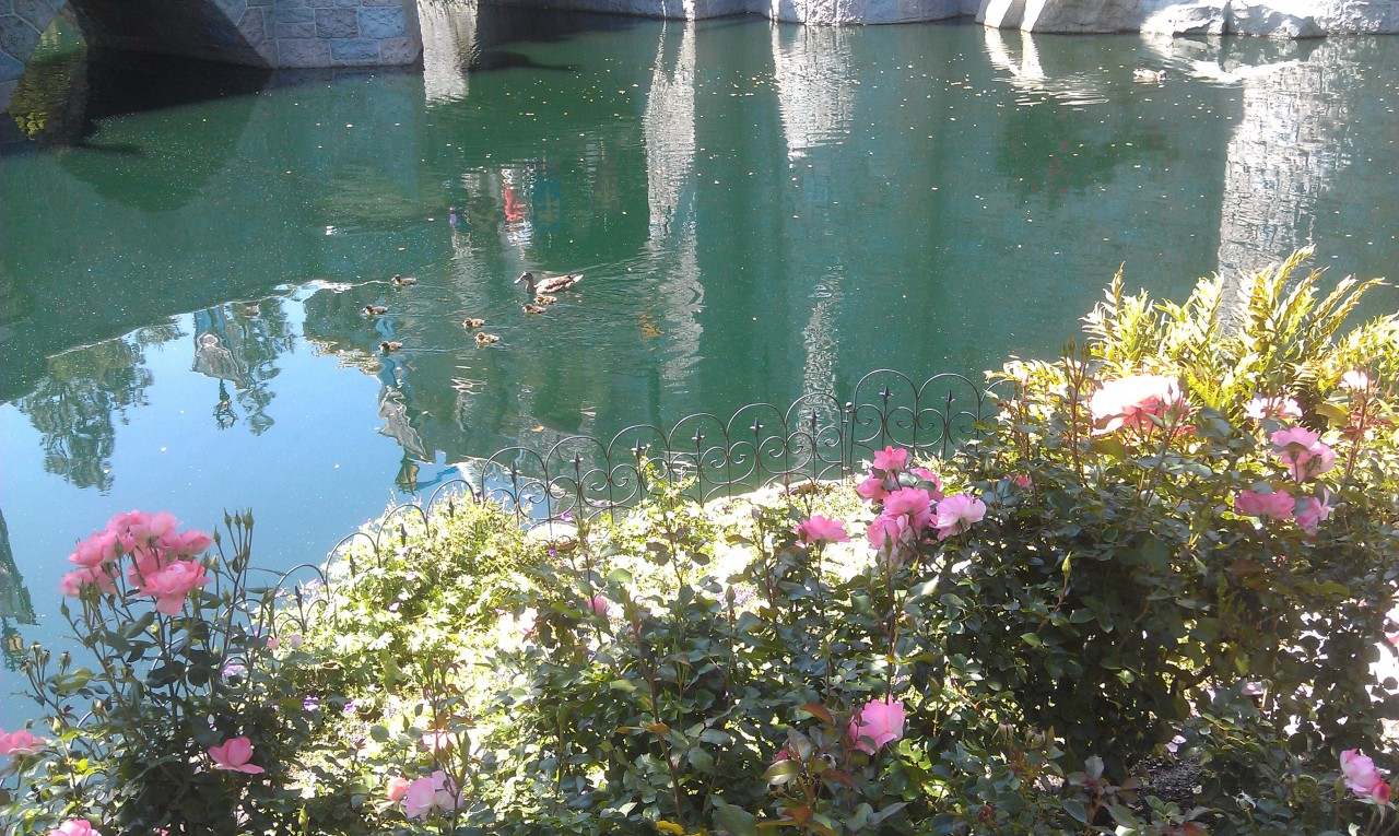 For all you Duck followers…  A mother and a bunch of ducklings in the castle moat.