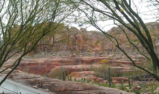 A great view while eating lunch in #CarsLand