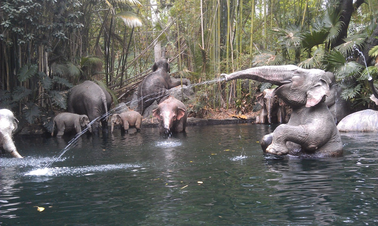 Jungle Cruise elephant bathing pool