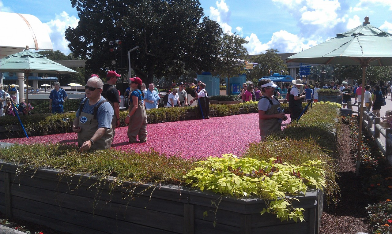 A cranberry bog set up for the festival.