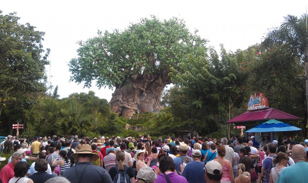 At Animal Kingdom this morning.  No more opening event.
