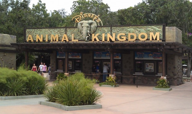 First park today.  Animal Kingdom