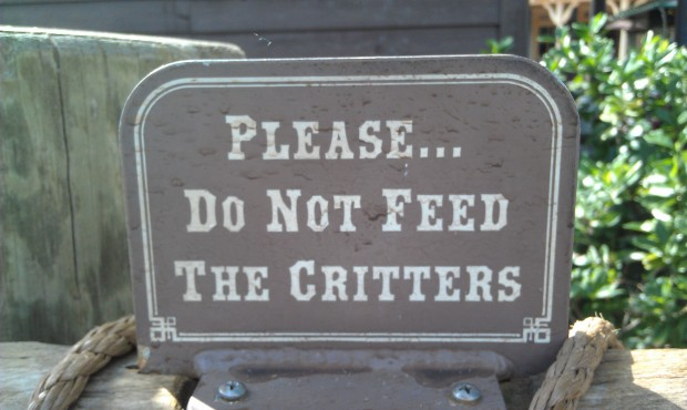 Remember not to feed the critters...