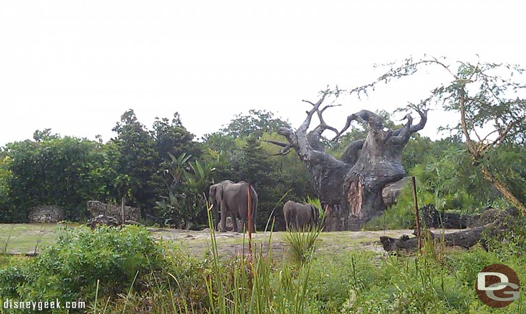 Some elephants out on the savanna