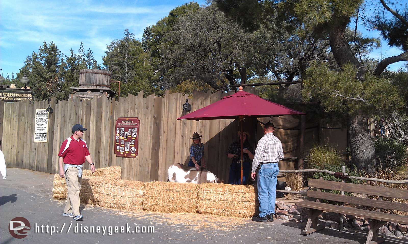 A Big Thunder Ranch resident in Frontierland, by the BTMRR entrance  tday.