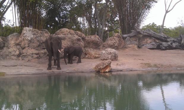 A couple Safari pictures..  some elephants