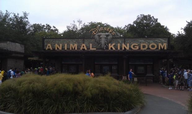Arrived at Animal Kingdom #DAK15
