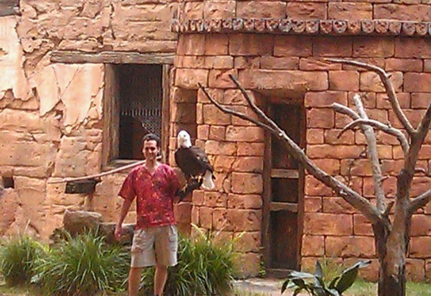 Flights of Wonder - Hope the bald eagle #DAK15