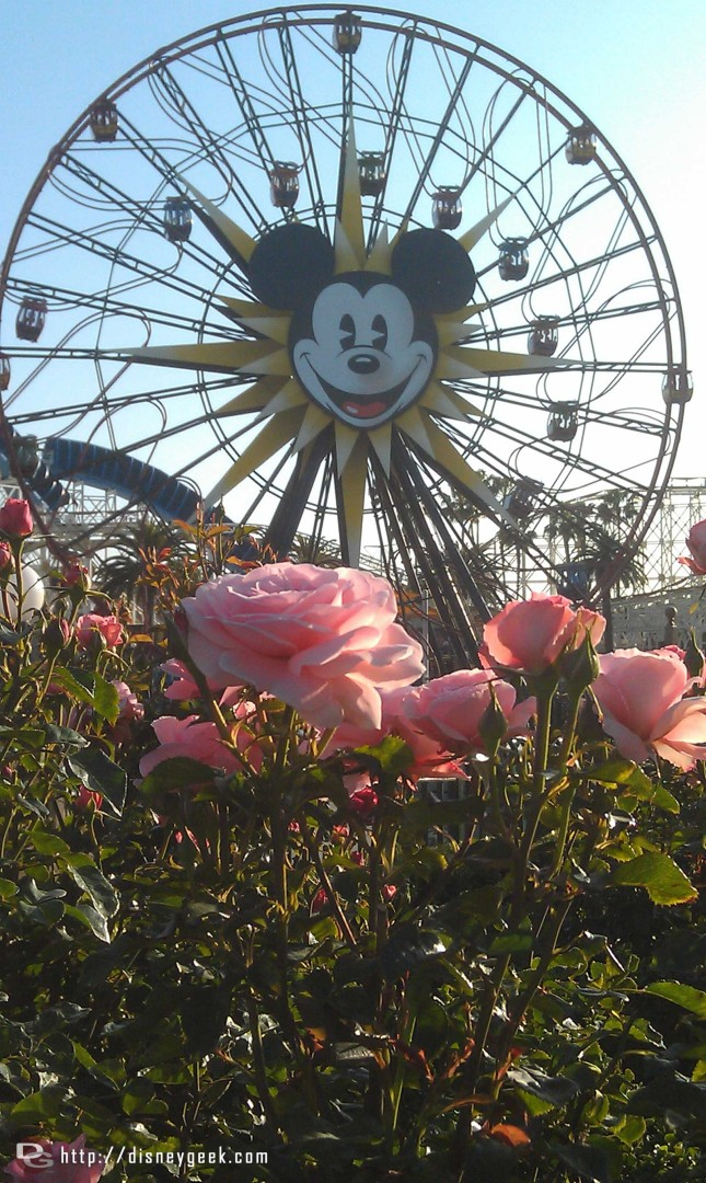 Mickeys Fun Wheel with flowers