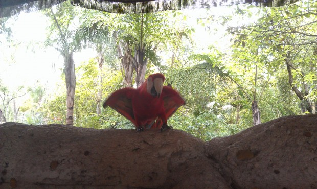 Next up Flights of Wonder - a macaw out for a preshow #DAK15