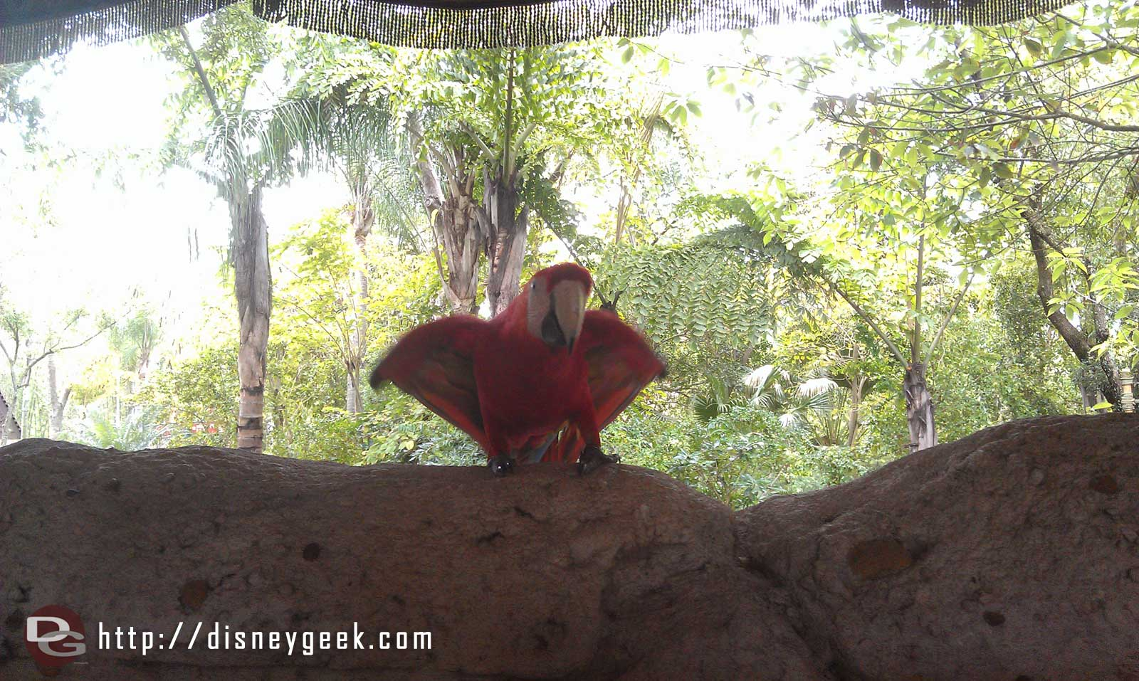 Next up Flights of Wonder – a macaw out for a preshow #DAK15