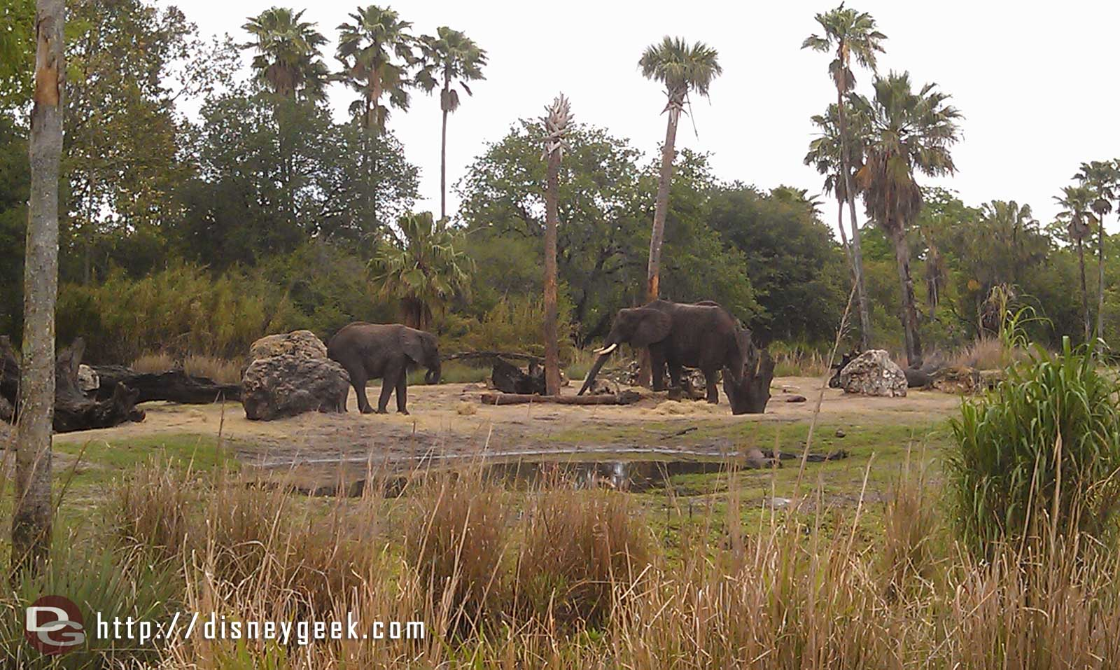 Spotted some elephants #DAK15
