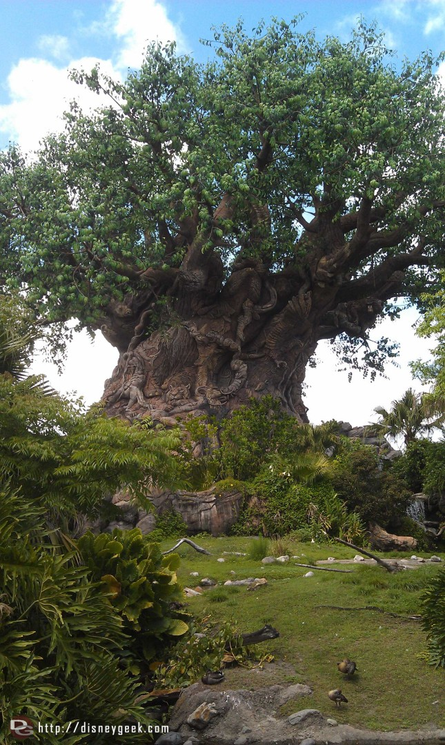 The Tree of Life #DAK15