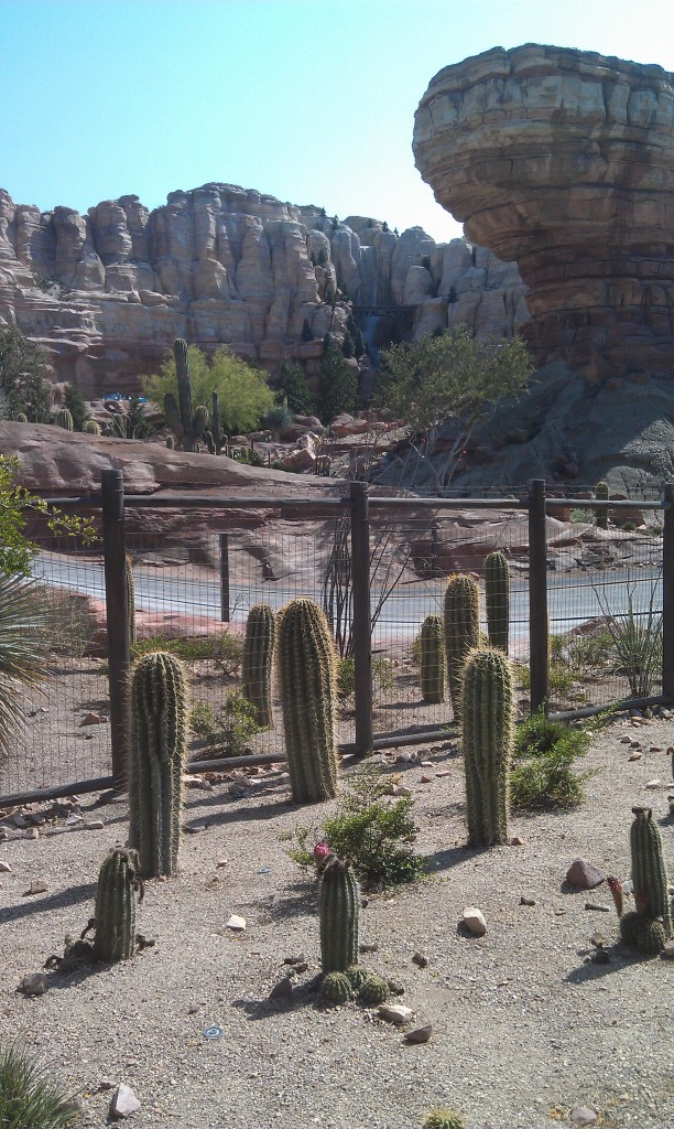 Ornament Valley, no blooms this week, only 50 min wait for Racers