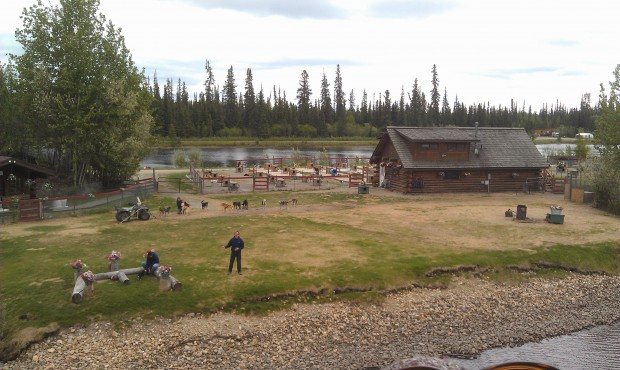 A sled dog demonstration as we passed by on our riverboat #Alaska