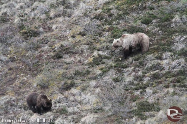 One last grizzly picture to wrap up the tour from yesterday - #Denali #Alaska - today on to Fairbanks...
