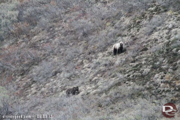 To conclude our Tundra tour, a mother Grizzly and her couple year old cub - #Denali #Alaska