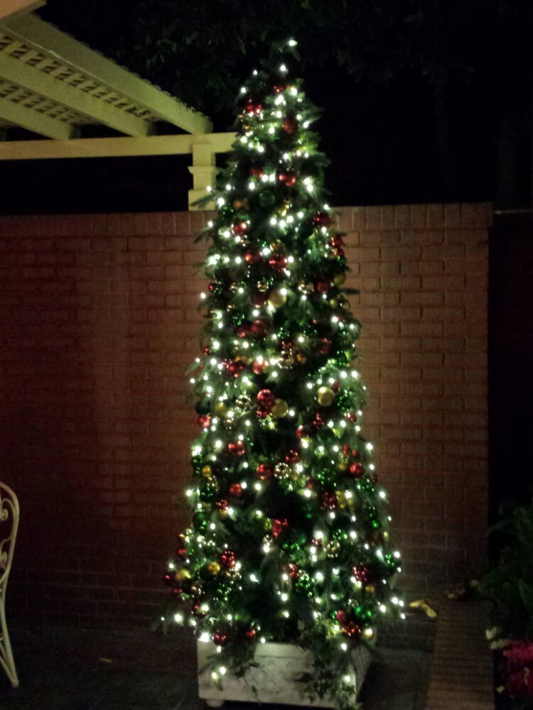 The Christmas Tree in tour garden