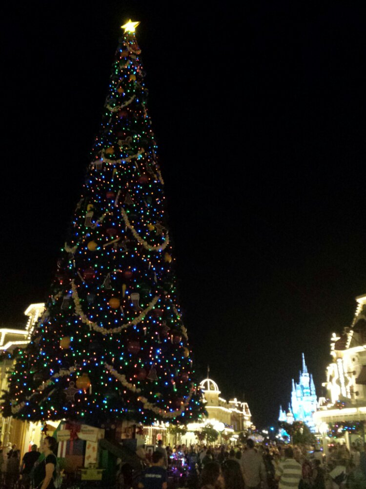 The Magic Kingdom tree this evening