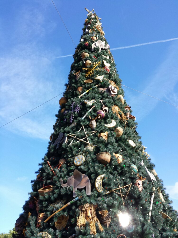 First park today, Disney's Animal Kingdom here is the tree at the entrance