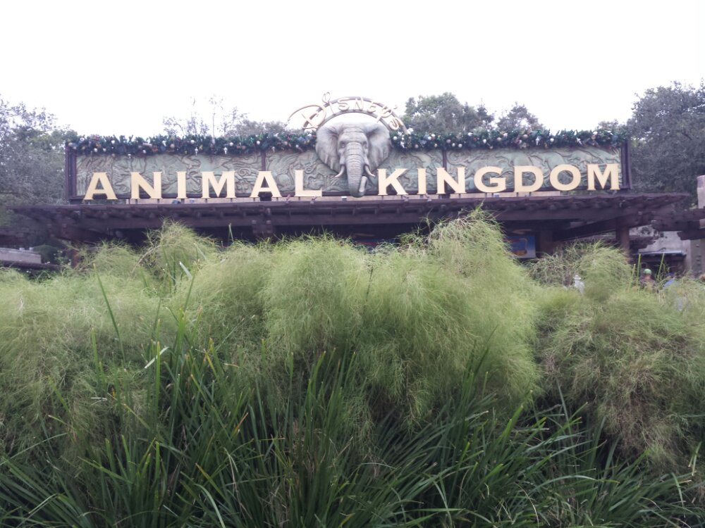 First stop today Disney's Animal Kingdom