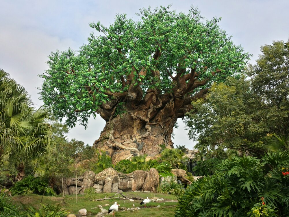 The Tree of Life at Disney's Animal Kingdom