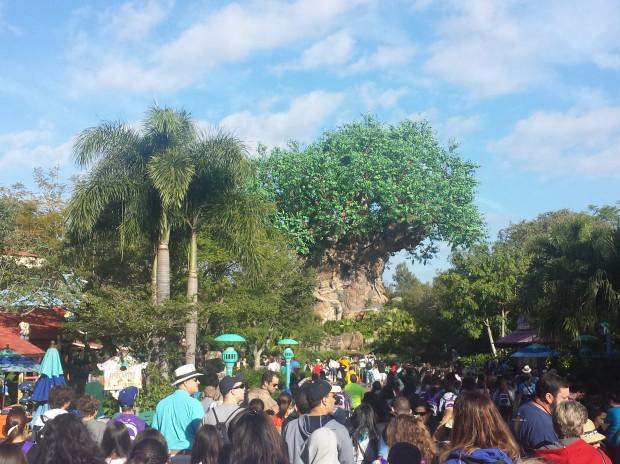 Disney's Animal Kingdom - Walking toward Discovery Island