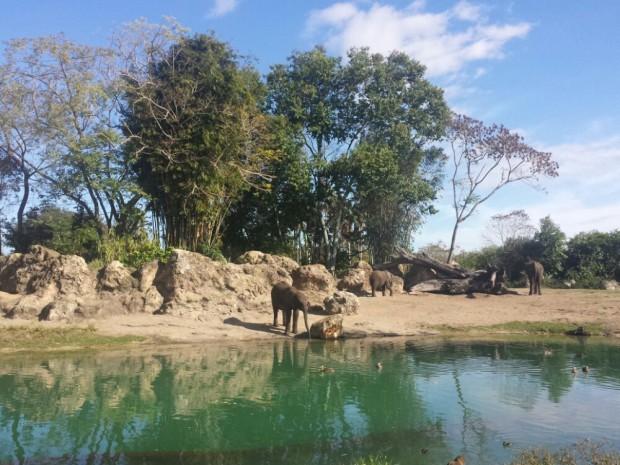 Disney's Animal Kingdom - Kilimanjaro Safari - Elephants