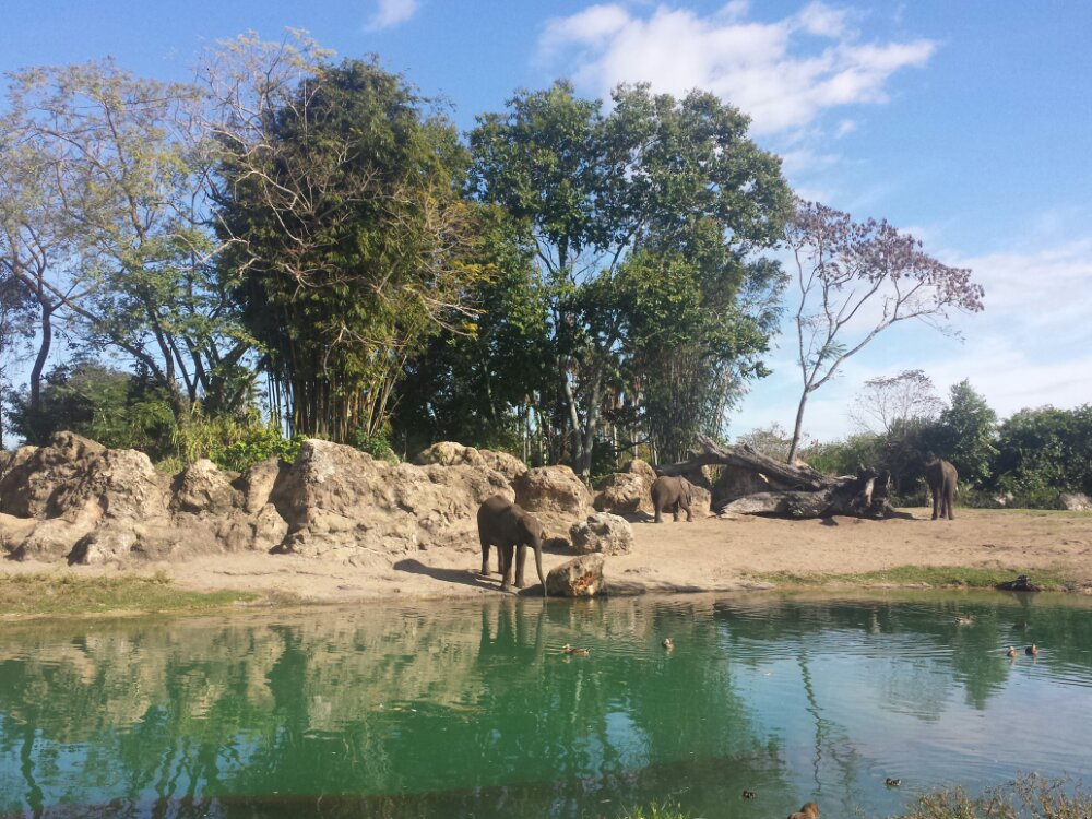 Kilimanjaro Safari – an elephant down by the water hole