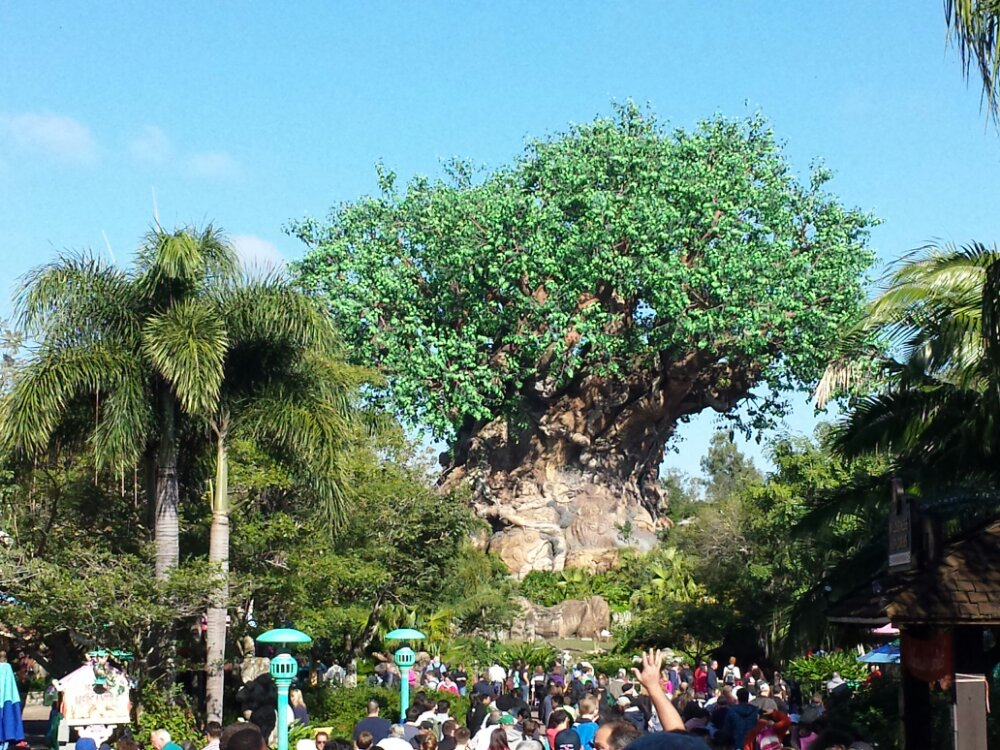 Starting my last day with a trip to the Animal Kingdom
