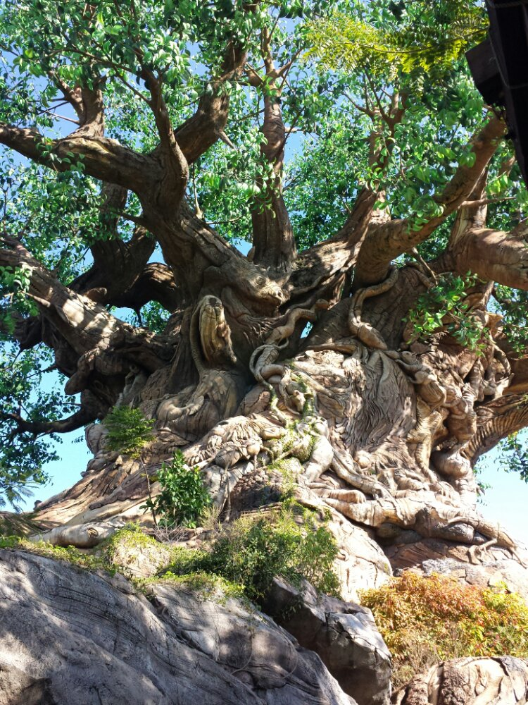A closer picture of the Tree of Life from where the trail ends
