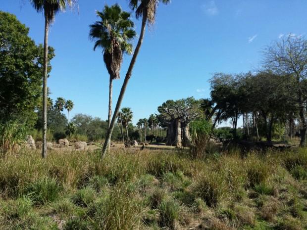 Disney's Animal Kingdom - Kilimanjaro Safari - Elephant Country
