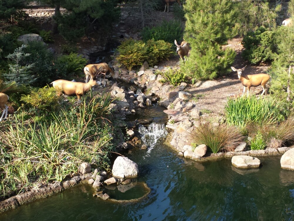 Deer along the Rivers of America
