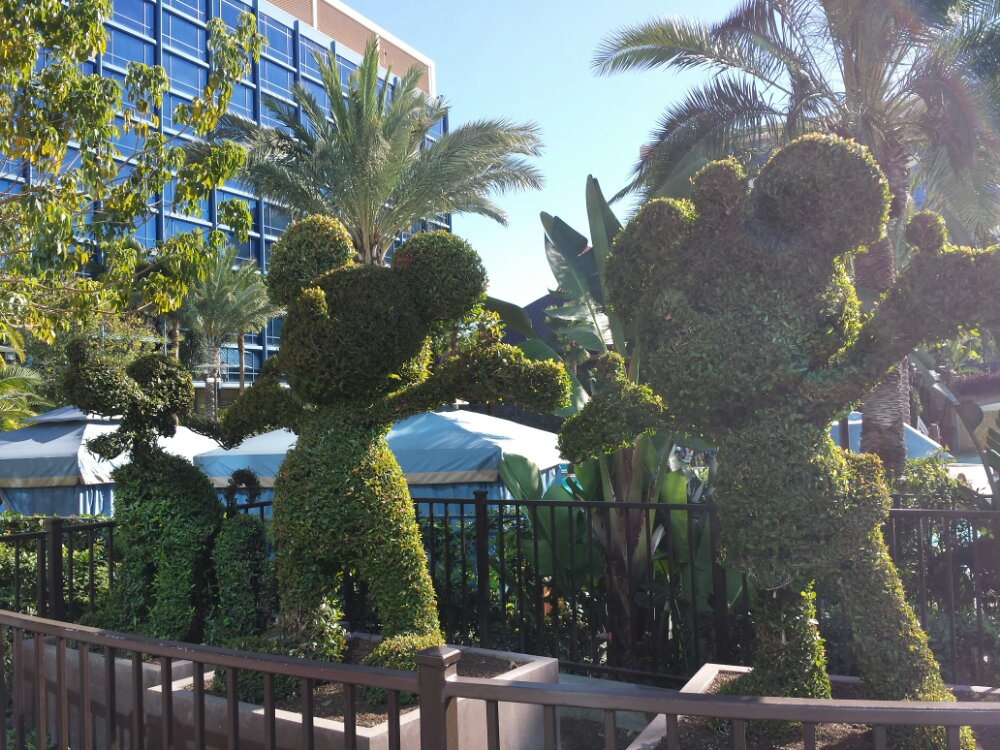 Minnie, Mickey, & Pluto topiaries near the Disneyland Hotel pool