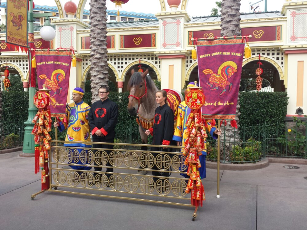 To celebrate the year of the horse a photo op with a horse @DCAToday Lunar New Year
