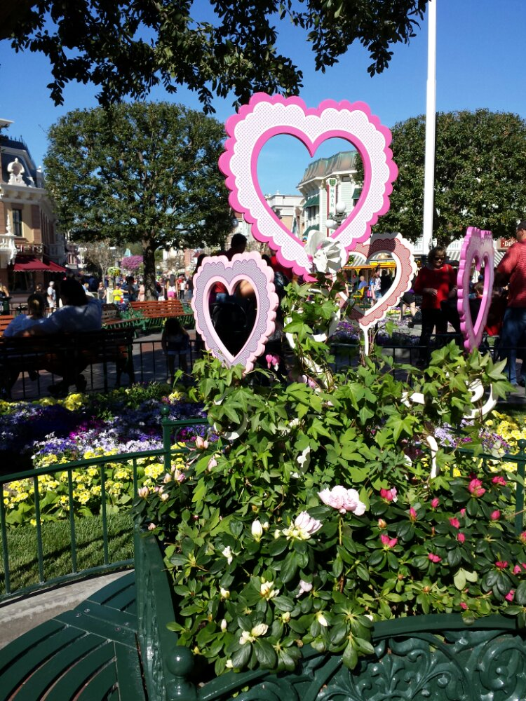 Town Square Valentine's Day decorations are in some of the planters #Disneyland
