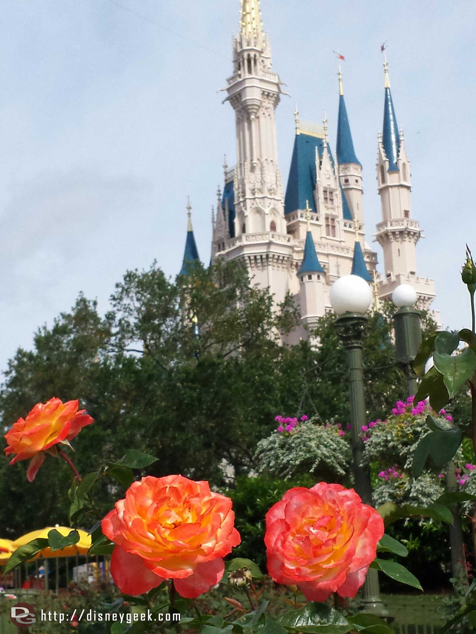 Cinderella Castle with roses in the foreground