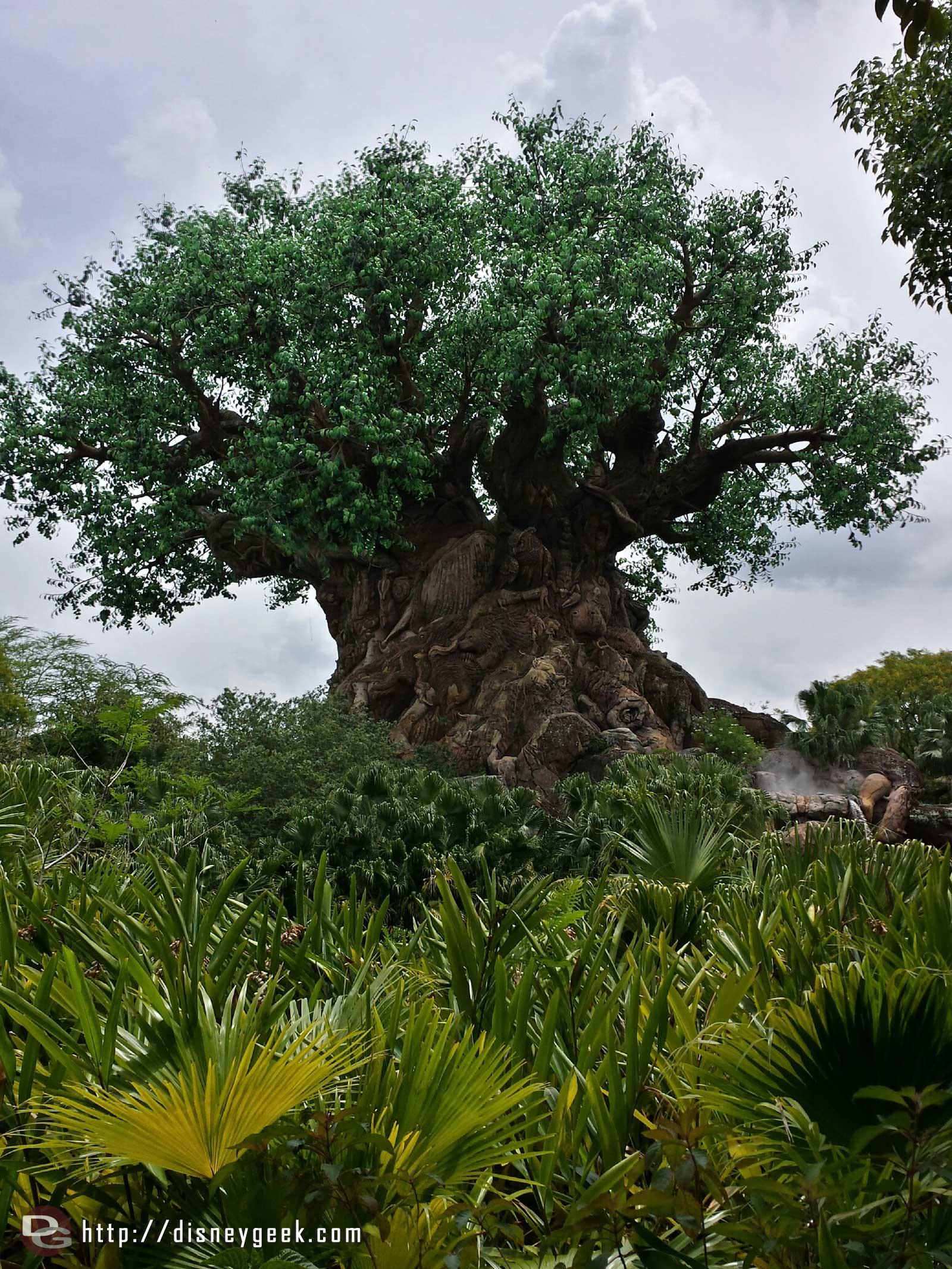 The Tree of Life – Disney's Animal Kingdom