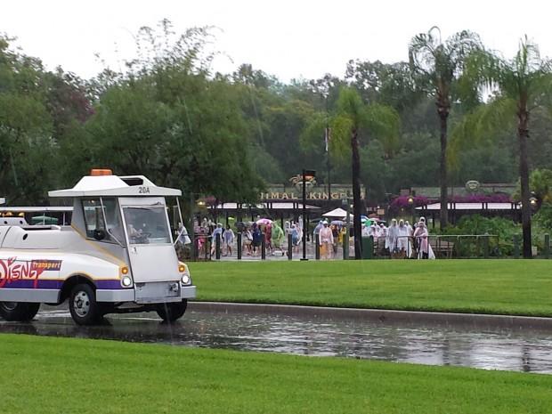 Transferred buses at Disney's Animal Kingdom