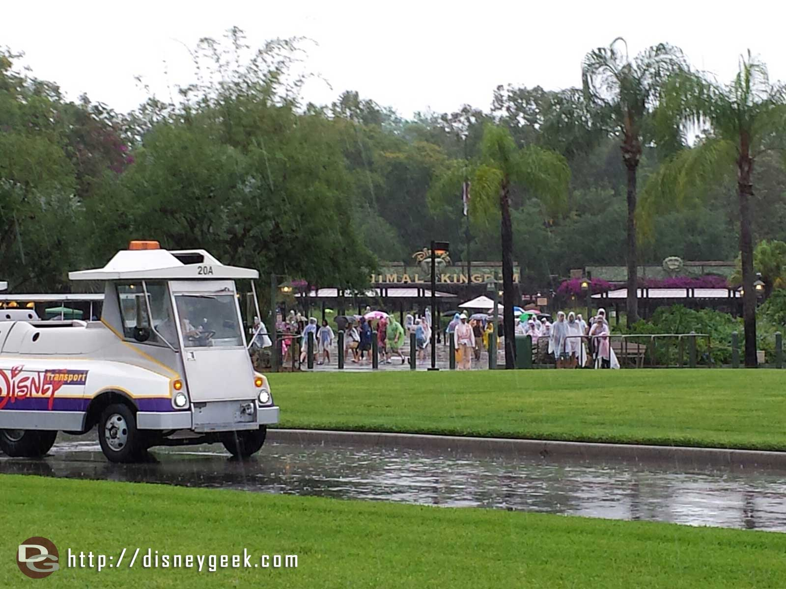 Transferred buses at Disney's Animal Kingdom