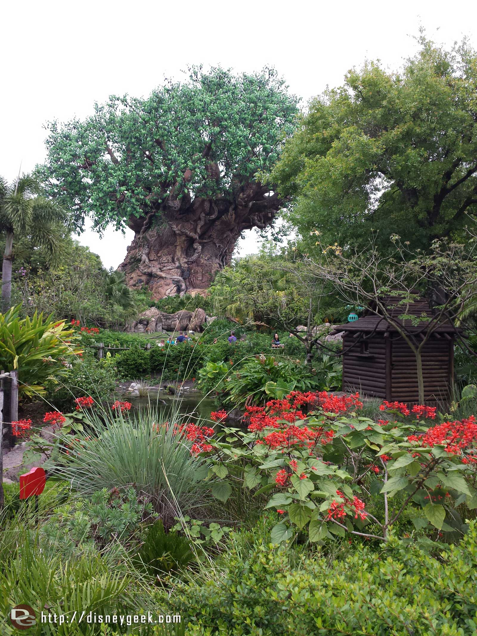 Tree of Life @ Disney's Animal Kingdom