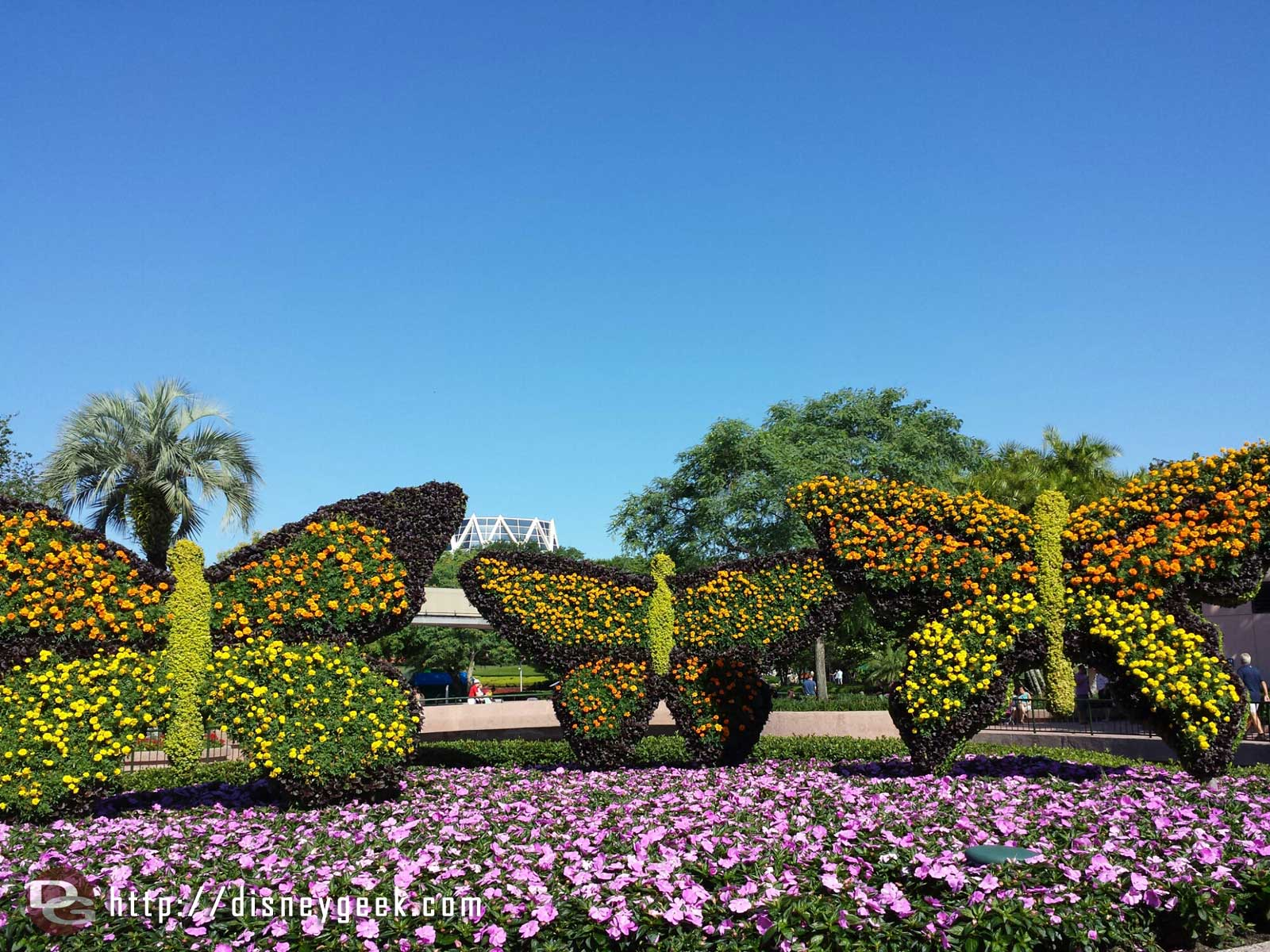 Butterfly topiaries –  Epcot International Flower & Garden Festival