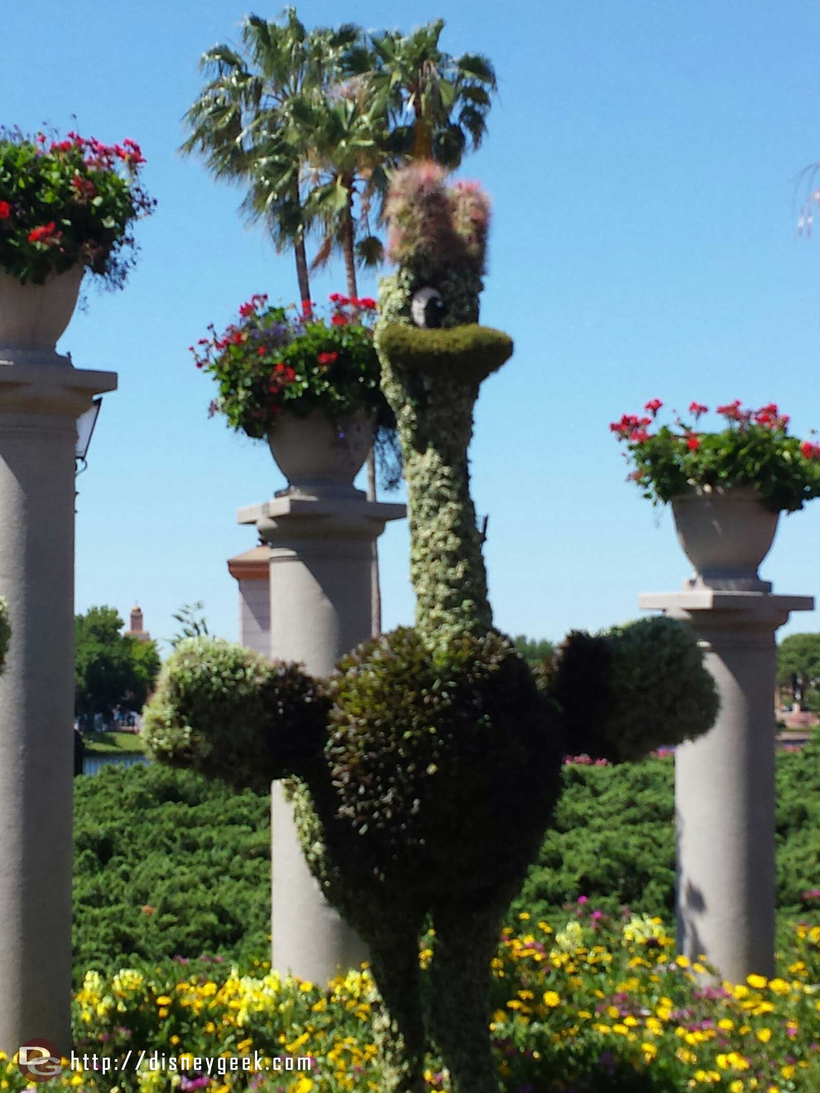 Fantasia Ostrich topiary    –  Epcot International Flower & Garden Festival
