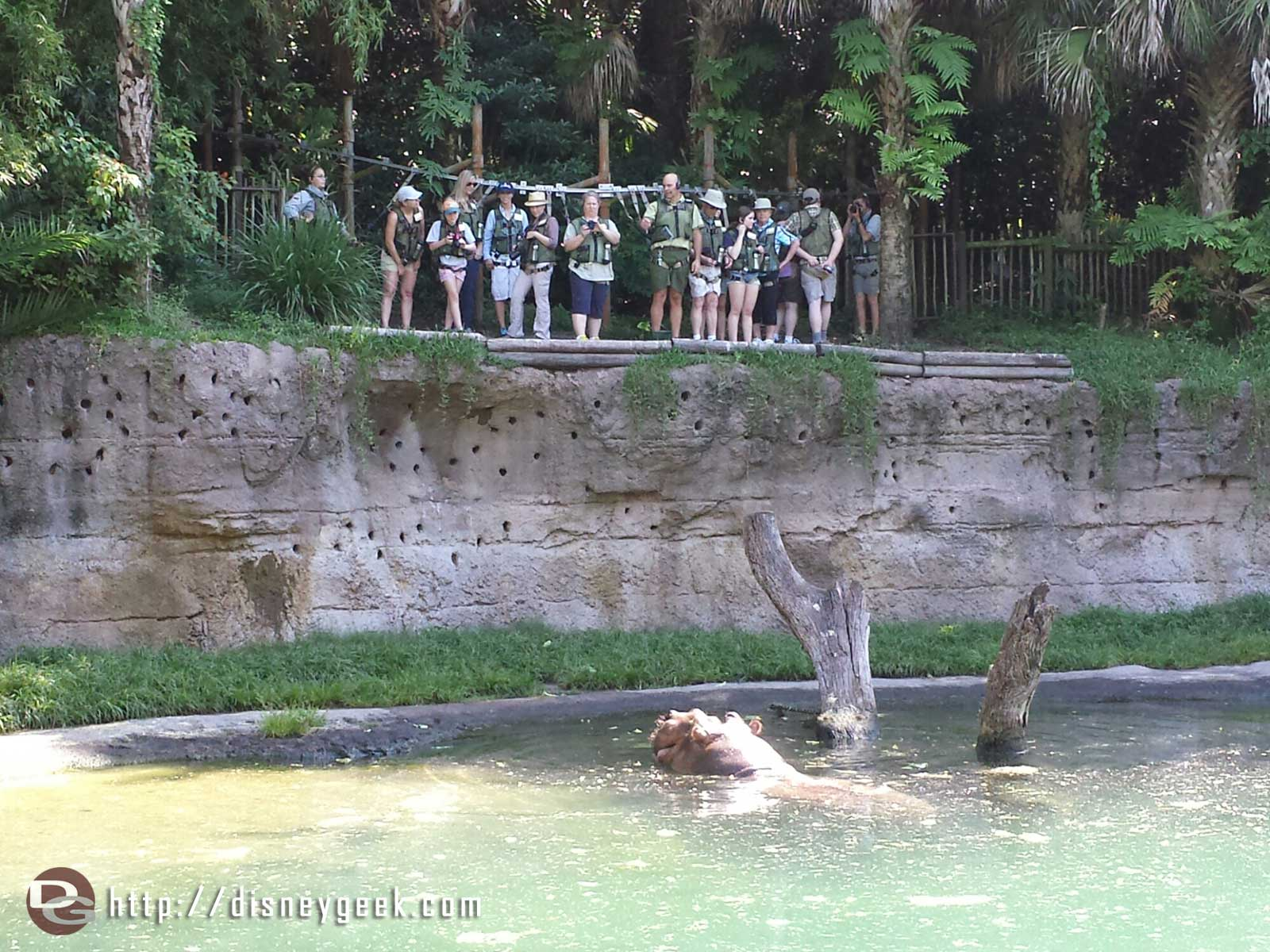 Passed a Wild Africa Trek group by the hippos on the Kilimanjaro Safari Disney's Animal Kingdom